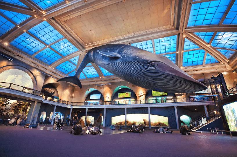 Museu da História Natural no Inverno