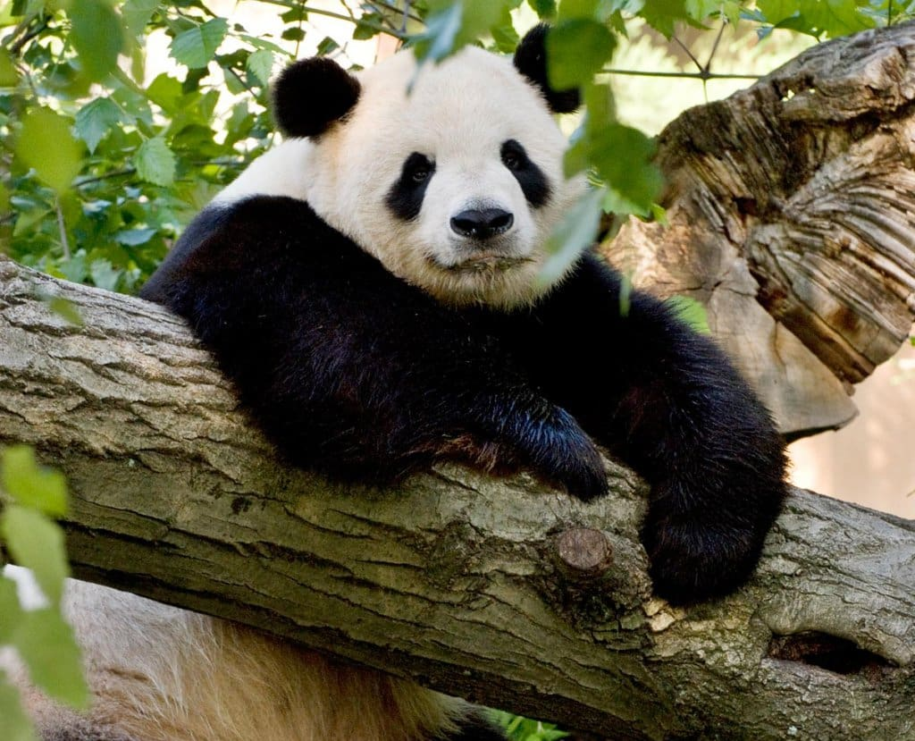 Smithsonian National Zoological Park em Washington
