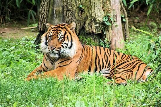 Conhecer o Smithsonian National Zoological Park em Washington