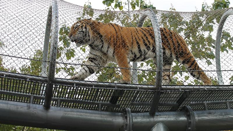 Zoológico da Filadélfia - Big Cat Falls