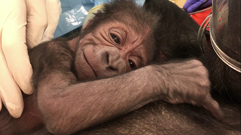 Zoológico da Filadélfia - PECO Primates Reserve